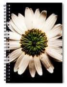 Dark Side Of A Daisy Square Fractal Spiral Notebook