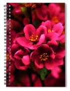 Dark Spring Dreams Spiral Notebook