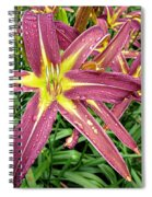 Dark Star Daylilies Spiral Notebook