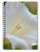 Datura Hybrid White Flower Spiral Notebook
