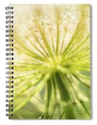 Daucus Carota - Queen Anne's Lace - Wildflower Spiral Notebook