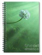 Dawning Spiral Notebook
