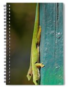 day geckos from Madagascar 1 Spiral Notebook