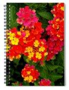 Day Glo Summer Spiral Notebook