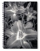 Day Lilies In Black And White Spiral Notebook