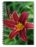 Day Lily 3648 Spiral Notebook