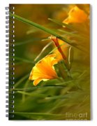 Day Lily Backlit Spiral Notebook