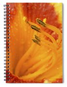 Day Lily In The Rain - 688 Spiral Notebook