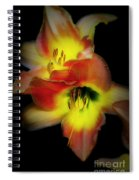 Day Lily On Black Spiral Notebook