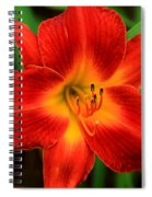 Day Lily1 Spiral Notebook