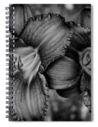 Daylilies Black And White Spiral Notebook