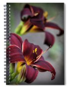 Daylilies Forever Spiral Notebook