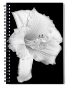 Daylily Flower Portrait Black And White Spiral Notebook
