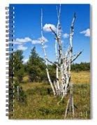 Dead Birch Trees Spiral Notebook