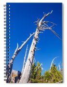 Dead White Trees Spiral Notebook