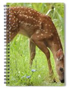 Little Fawn Blue Wildflowers Spiral Notebook