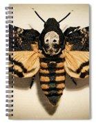 Deaths Head Hawk Moth Framed Version Spiral Notebook