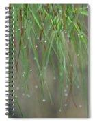 December's Green Spiral Notebook
