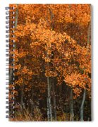 Deciduous Aspen Forest In Fall Spiral Notebook