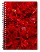 Deep Red Carnation Spiral Notebook