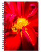 Deep Red Dahlia With Yellow Center Spiral Notebook