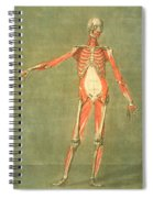 Deeper Muscular System Of The Front Spiral Notebook