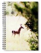 Deer 2 - Buck - White-tailed Spiral Notebook