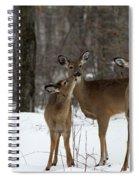 Deer Affection Spiral Notebook