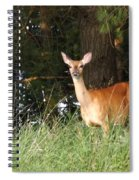 Deer At Dusk V3 Spiral Notebook