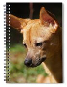 Deer-head Chihuahua Spiral Notebook