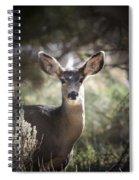 Deer I Spiral Notebook