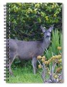 Deer II Spiral Notebook