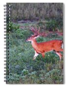 Deer-img-0113-001 Spiral Notebook