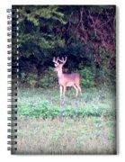 Deer-img-0122-7 Spiral Notebook