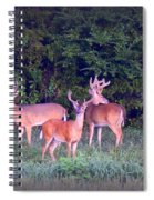Deer-img-0150-001 Spiral Notebook