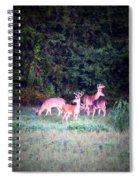 Deer-img-0158-003 Spiral Notebook