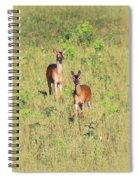 Deer-img-0283-001 Spiral Notebook