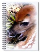 Deer-img-0349-002 Spiral Notebook