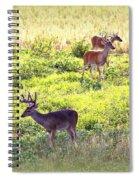 Deer - 0437-004 Spiral Notebook