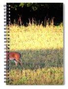 Deer-img-0627-001 Spiral Notebook