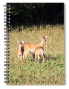 Deer-img-0642-001 Spiral Notebook