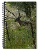 Deer In The Forest Spiral Notebook