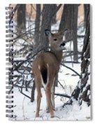 Deer In The Grove Spiral Notebook