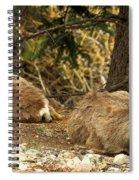 Deer In The Rockies Spiral Notebook