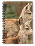 Deer In The Rocky Mountains Spiral Notebook