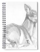Deer Lying Down Drawing Spiral Notebook
