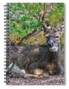 Deer Relaxing Spiral Notebook