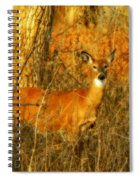 Deer Spotted In A Golden Glowing Field  Spiral Notebook