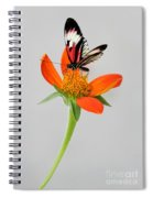 Delicate Beauty Spiral Notebook