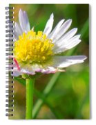 Delicate Daisy In The Wild Spiral Notebook